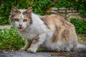 猫咪有颗玻璃心这3件事简单对它形成心灵伤口你得多疼猫